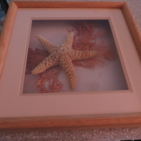 Starfish And Coral In A Wooden Frame